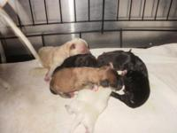 Olivia had 6 pups Dec 17 2014. I male left. Will
