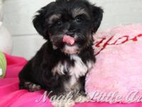 We are a breeder of the highest quality Havanese