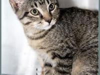 HAVARTI's story $97.50 FEE INCLUDES: neutering/spaying,