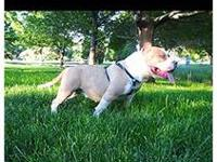 I have a 92Five Bully HAVOC DAUGHTER FOR SALE!! She's