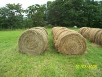 "FIRST cut hay of 2012, 4' X 5'6"". Fine Orchard with"
