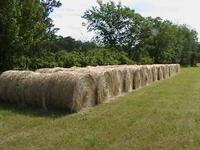 Large round bales 4 x 5 very nice hay.$ 25 ea. Located