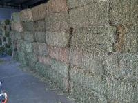 We have grass and alfalfa mix hay bales for sale!