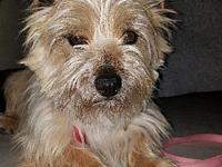 HAYDEN in MO's story Col. Potter Cairn Terrier Rescue