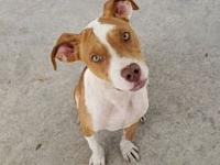 Haylee's story Haylee is a sweet 6 month old female