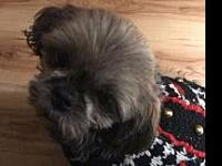 Hayli's story Hayli is a 15 pound , 4 yr old Lhasa poo