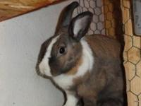 Hazel is an adorable bunny-wabbit who is very bonded