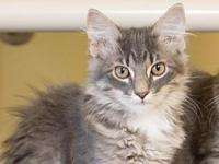 My story Hazel is a spayed female kitten, born late May