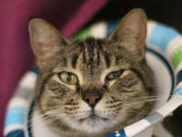 Hazel is an outgoing 3-year-old who, we have to say,