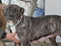Hazie's story PAW Animal Shelter is a high intake No