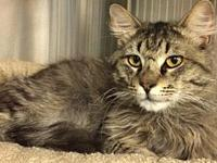 HealthCliff's story HeathCliff( A162426) is a 2 year