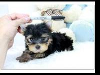 Healthy Yorkie Puppies. Healthy litter of very playful,