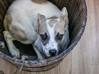 Heart's story Heart is currently in our care. All dogs