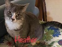 Heather (adult female)'s story Meet Heather -- a gray