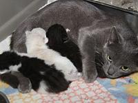Heather & Kittens's story Heather is a beautiful 3-year