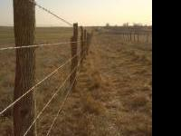 Hedge posts for sale. Lines and Corners. Fencing also