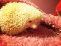 I'm looking for a home for my hedgehog. She turned 1 in