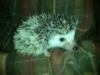 I have 2 Hedgie babies that are 7wks and ready to go.I