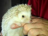 Re-Homing for an adoption fee to cover cage, supplies,