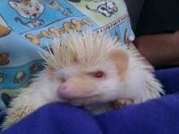 Hi there. I have a female hedgehog that needs a new,