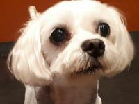 NYC Area -- A recent rescue from a puppy mill in South