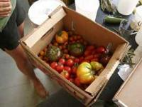 We have delicious heirloom organic tomatoes available