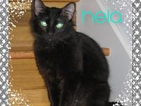 Hela's story Hela is a fun loving kitty that may take a