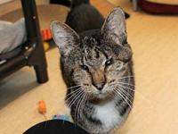 Helen's story Helen came to Purrfect Pals from a home