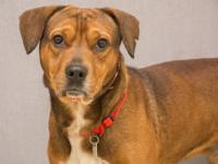 Hemlock:  I'm a 3 year old hound mix that is new to the