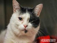 My story Hemmingway is available for adoption at the