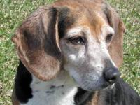"""HENRY""--Beagle mix 6-7 years   Male 31 lbs.  I'm a"