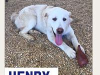 Henry's story Meet Henry. This super sweet boy is 1