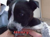Henry and his brother Hank are from the same liter and