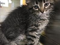 HERA's story 8 weeks old. Female Adoption fee: $75 plus