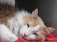 HERBERGER's story AFFECTIONATE FLUFFBALL! Favorite