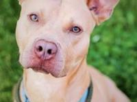 Hercules's story !!! AVAILABLE for Adoption at ACCT