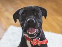 Meet Hercules! Adoption Fee: $100 Apply: