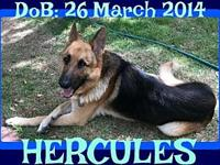 HERCULES's story Please contact Jenny Cope