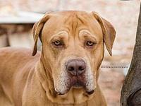 Hercules's story Hercules is a 1 year old Mastiff. This