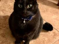 My story Herman is a loving cat that is playful and