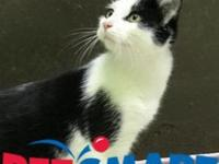 Hermie's story I am located at Janesville PetSmart! If