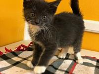 Hermione's story Hermione is a sweet little 8 week old