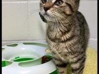 Hermione's story All cats are litter box trained,