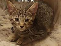 My story Meet Hermione. This witty kitty would make the