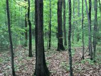 Awesome 5 acre building lot!! Completely wooded &