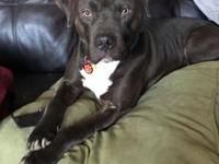 Hero's story Hero is a 2 year old Staffordshire Terrier