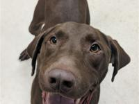 Meet Hershey! Are you looking for something sweet in