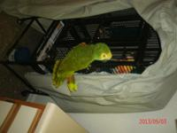 hi im selling my amazon with her cage and her perch