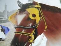 hi we at ( giddy up go tack ) have Thoroughbred Racing