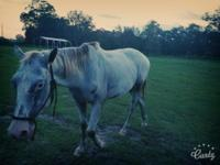 2010? Appaloosa Gelding that very green but willing to